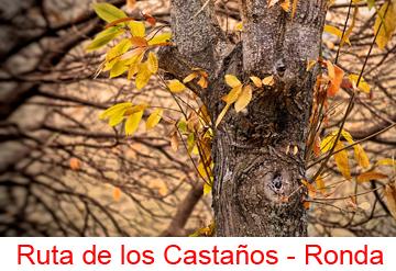 link-Ruta de los Castaños360x247